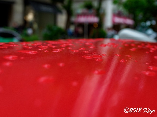 E6163620_CameraRAW_2048_signed.jpg