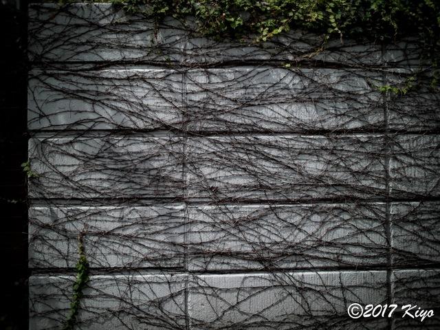 E9031100_CameraRAW_2048_signed.jpg